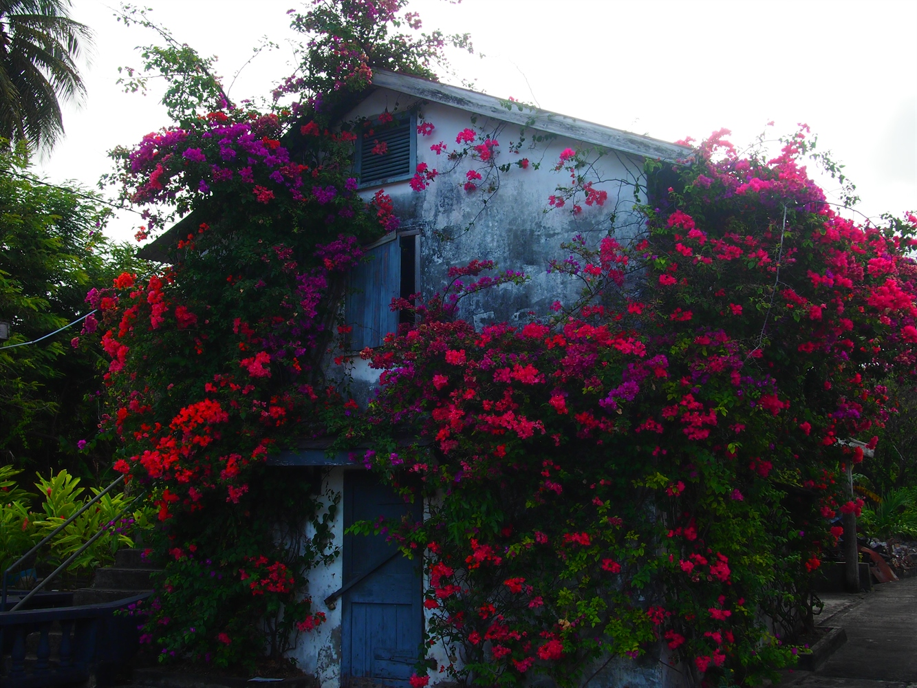 House surrounded by flowers