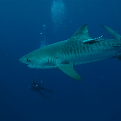 Mozambique Diving Holidays