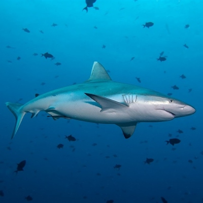 South Africa Diving Holidays
