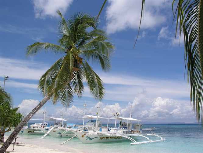 Boat and palm tree