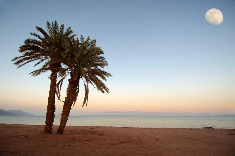 Palm Tree & Moon