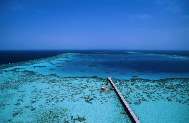 Arial view red sea reef
