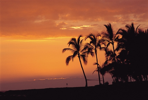 Sunset with Palm Tress