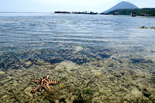 Rief view & Starfish