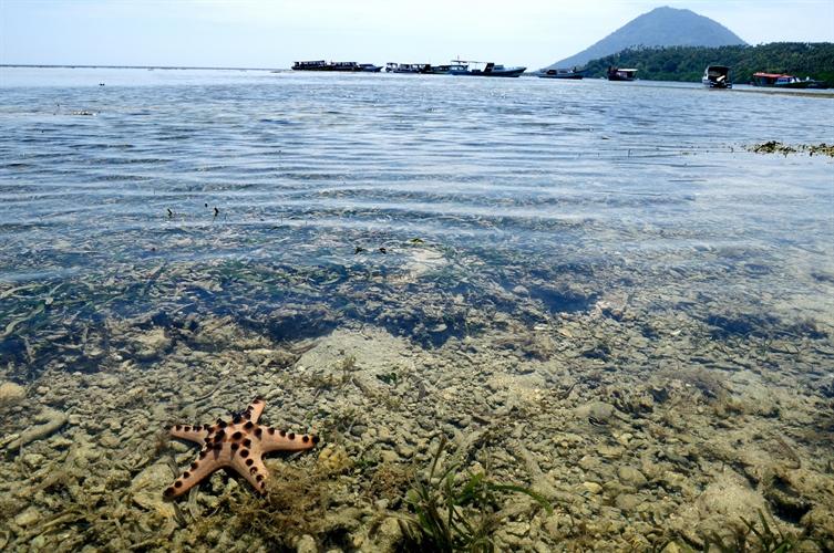 Rief view & Starfish
