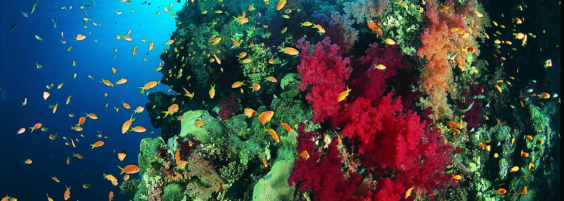 Reef Colour