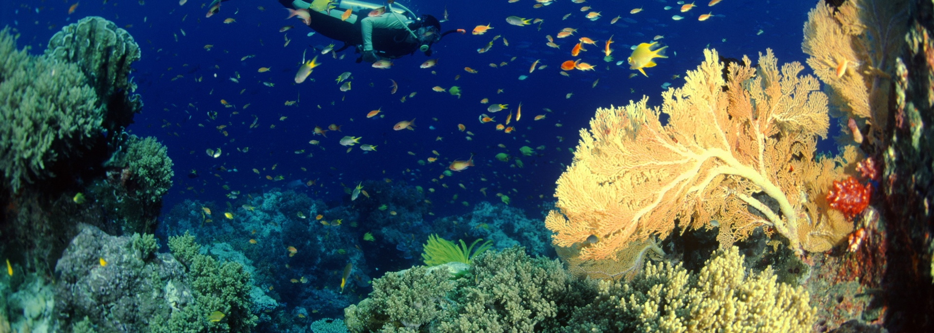 Coral Reef & Diver