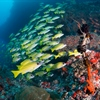 Channel Diving in the Maldives - Where the excitement really begins!