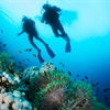 Dive Mysteries with Monty Halls