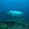 Top 10 creatures on every divers bucket list