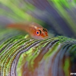 NAD Lembeh with Alex Tattersall