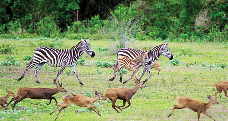 Calauit Wildlife Safari Tour