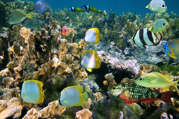 Various Fish & Coral Reef