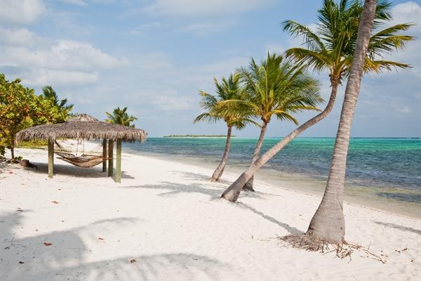 Palm Trees & Sun lounger