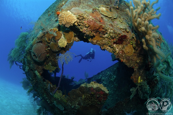 Marine Life & Diver