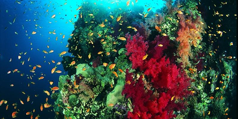 Reef Colour