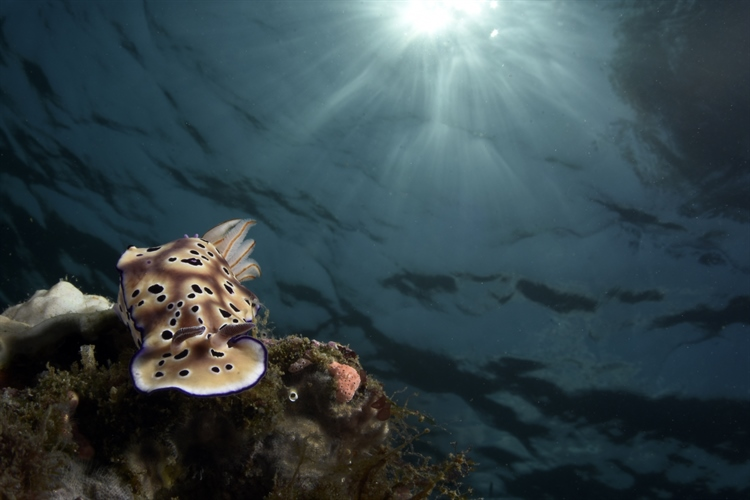 Nudi and Sun by Alex Tattersall