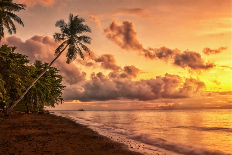 Sunset on beach with palm trees
