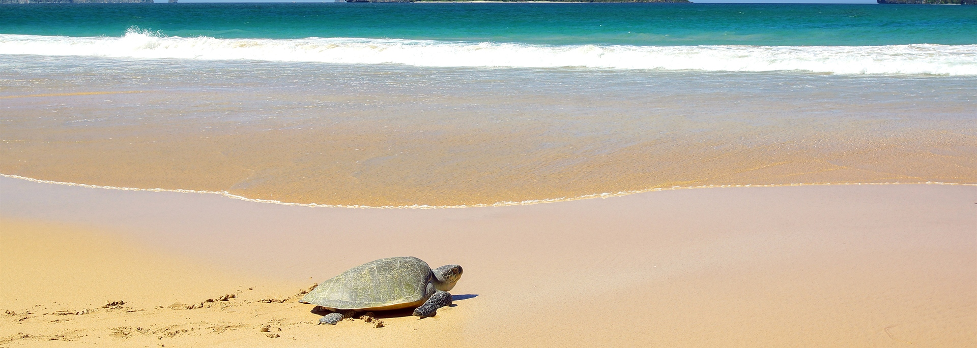 Baby Turtle on Sandy Beach