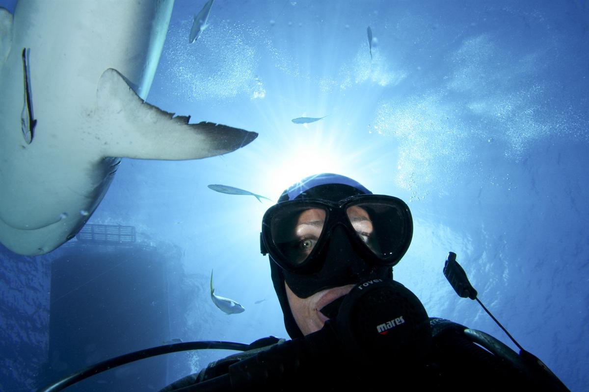 Diver under Shark