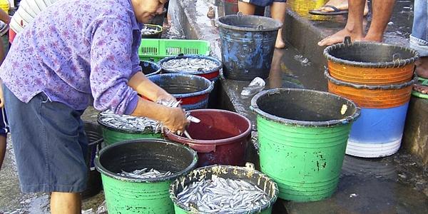 Fishing Market