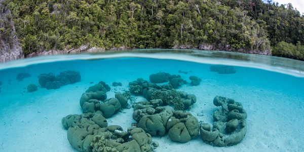 Coral Reef view on crystal waters