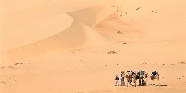 Camells