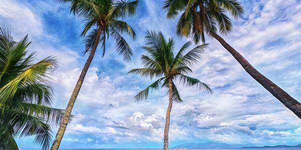Palm Trees & Boats
