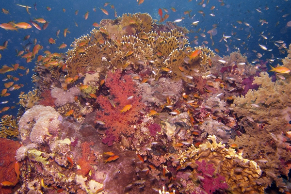 Colourful Reefs