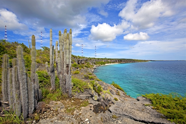 Nature in Bonaire