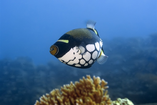 Fish under coral