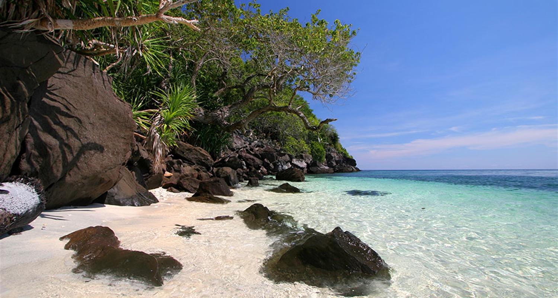 Apo Island Day Trip